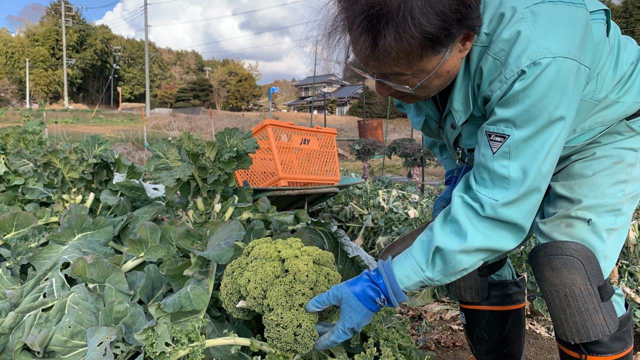 エコフィールドは野菜を育てる工務店!