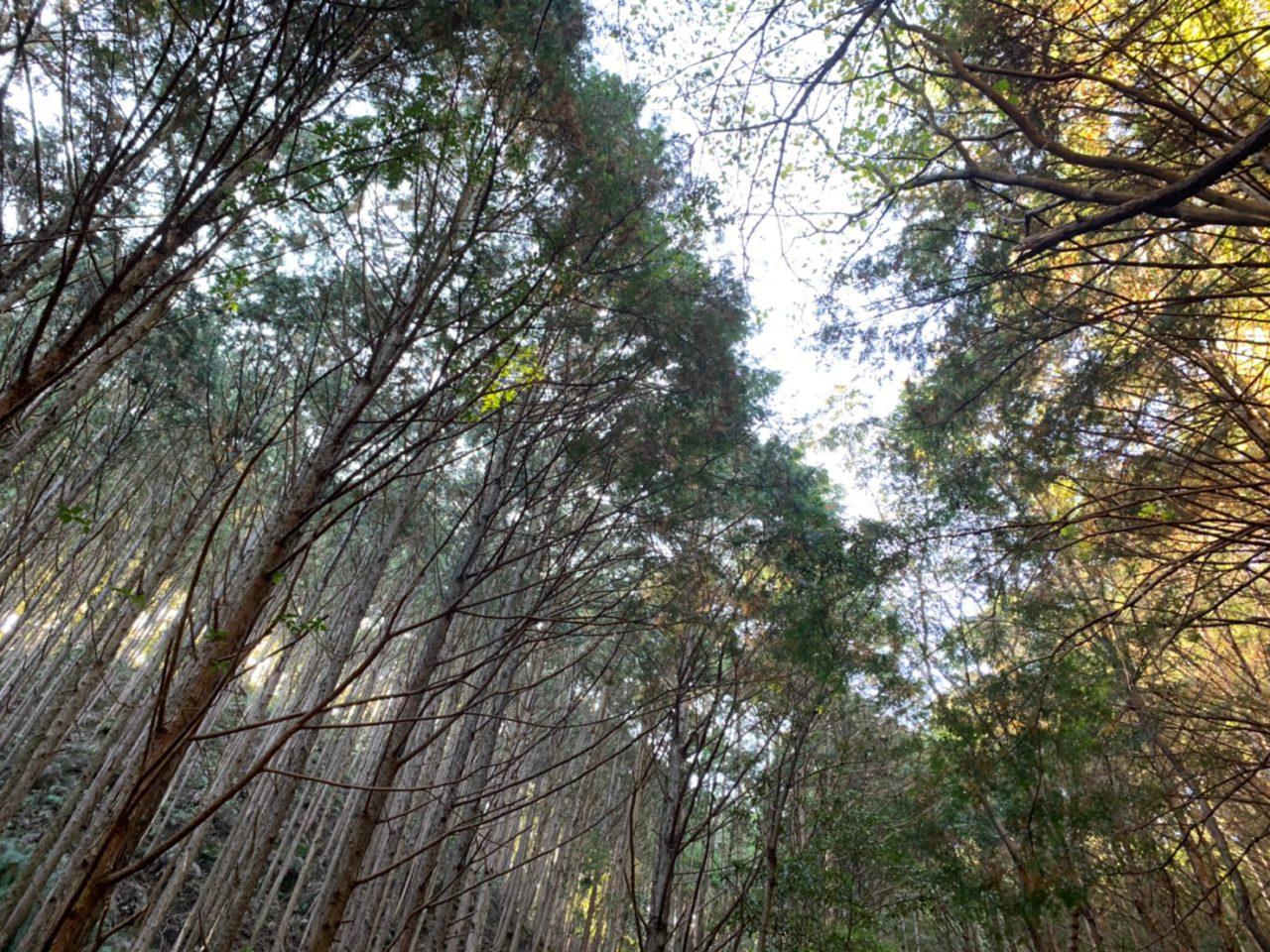 世界中で木材が足りない...危機